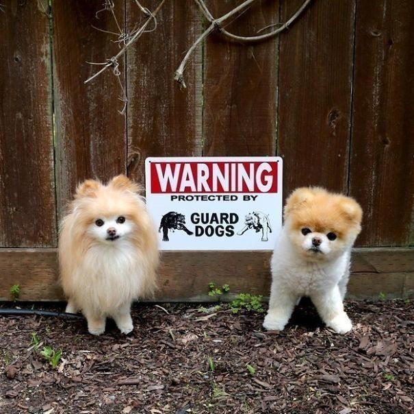 Facebook / Boo الكلاب